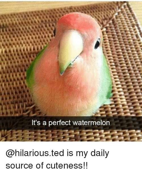 Memes, Ted, and Hilarious: It's a perfect watermelon @hilarious.ted is my daily source of cuteness!!