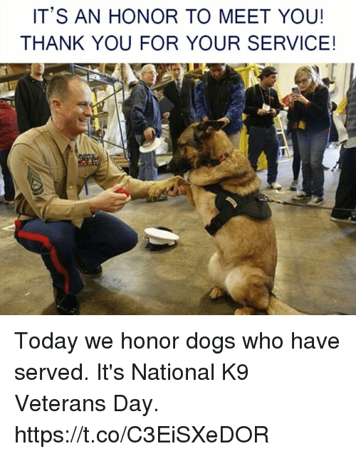 Dogs, Memes, and Thank You: IT'S AN HONOR TO MEET YOU!  THANK YOU FOR YOUR SERVICE! Today we honor dogs who have served. It's National K9 Veterans Day. https://t.co/C3EiSXeDOR