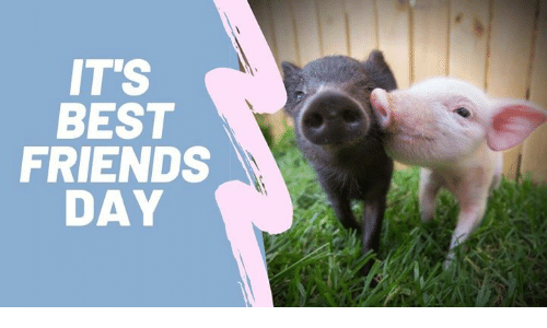 Friends, Memes, and Best: IT'S  BEST  FRIENDS  DAY