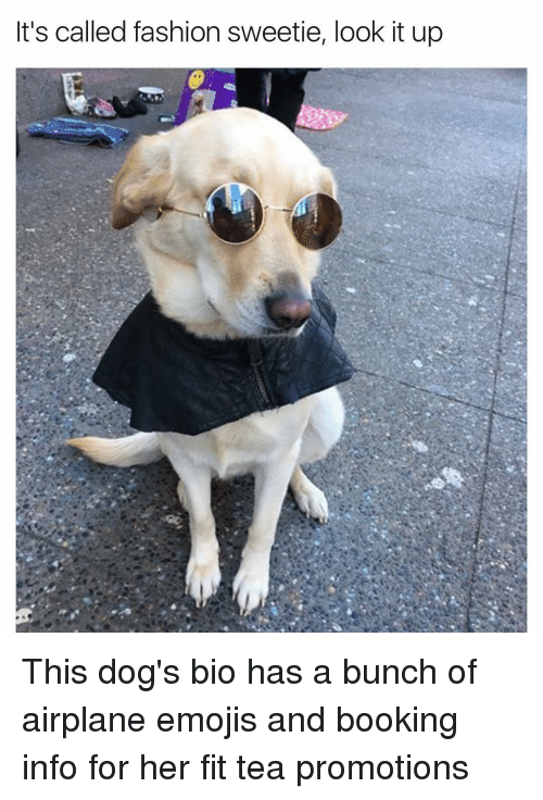 its called fashion sweetie look it up this dogs bio 12430468 it's called fashion sweetie look it up this dog's bio has a bunch of