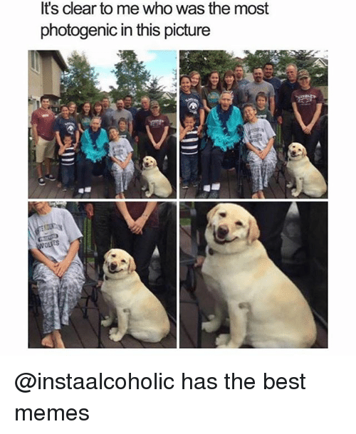 Funny, Memes, and Best: It's clear to me who was the most  photogenic in this picture @instaalcoholic has the best memes