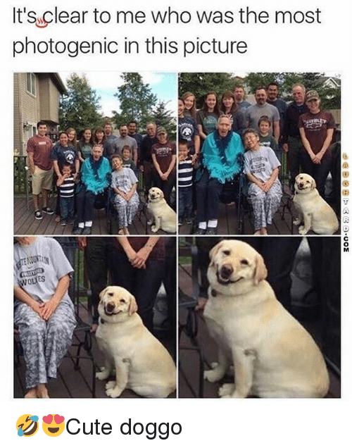 Memes, 🤖, and Doggo: It's clear to me who was the most  photogenic in this picture  ES 🤣😍Cute doggo