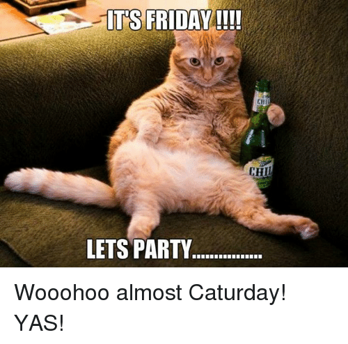 its friday lets party chi wooohoo almost caturday yas 19775787 its friday lets party chi wooohoo almost caturday! yas! caturday
