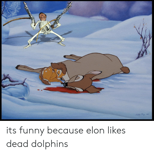 Funny, Dolphins, and Elon: its funny because elon likes dead dolphins