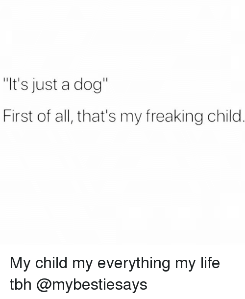 "Life, Tbh, and Girl Memes: ""It's just a dog  First of all, that's my freaking child My child my everything my life tbh @mybestiesays"