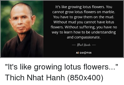 Its like growing lotus flowers you cannot grow lotus flowers on flowers how to and lotus its like growing lotus flowers you cannot mightylinksfo