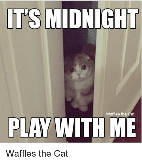 its midnight waffles the cat play with me waffles the 20840160 its midnight waffles the cat play with me waffles the cat meme,Play With Me Meme