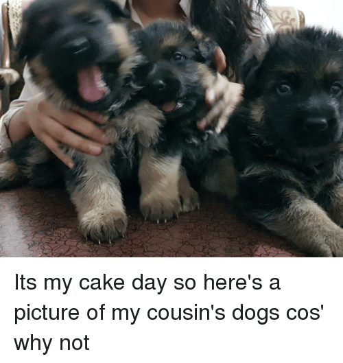Its my cake day so heres a picture of my cousins dogs cos why not dogs hello and cake its my cake day so heres a picture of urtaz Gallery