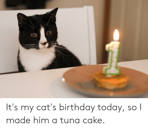Birthday Cats And Cake Its My Today So I Made
