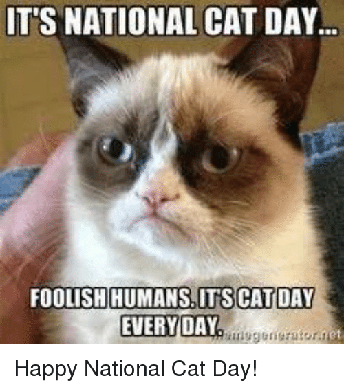 its national cat day foolish humans its cat day everyday 5664667 it's national cat day foolish humans its cat day everyday happy