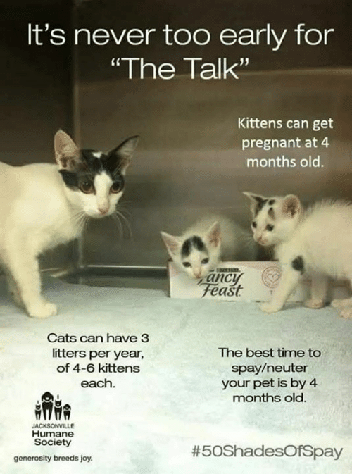 It's Never Too Early for the Talk Kittens Can Get Pregnant