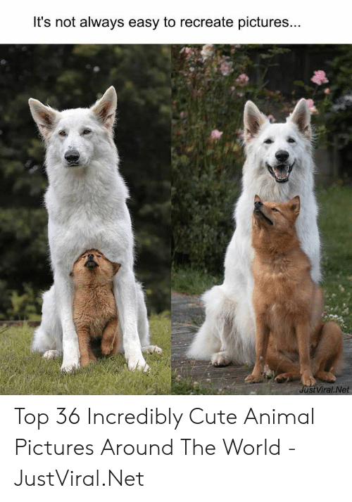 Cute, Animal, and Pictures: It's not always easy to recreate pictures...  JustViral Net Top 36 Incredibly Cute Animal Pictures Around The World - JustViral.Net