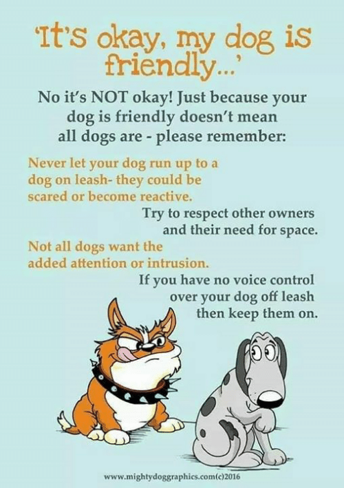 Dogs, Memes, and Respect: Its okay, my dog is  triendly...  No it's NOT okay! Just because your  dog is friendly doesn't mean  all dogs are please remember:  Never let your dog run up to a  dog on leash- they could be  scared or become reactive.  Try to respect other owners  need for space.  and their  Not all dogs want the  added attention or intrusion.  If you have no voice control  over your dog off leash  then keep them on.  OE  www.mightydoggraphics.com(c)2016