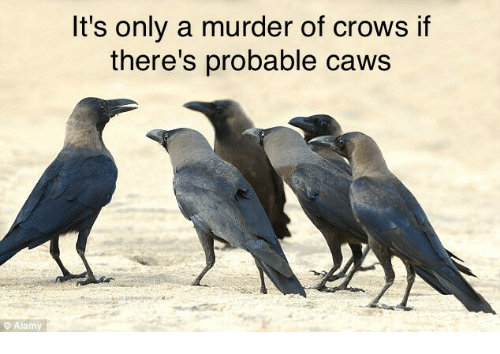 its-only-a-murder-of-crows-if-theres-pro