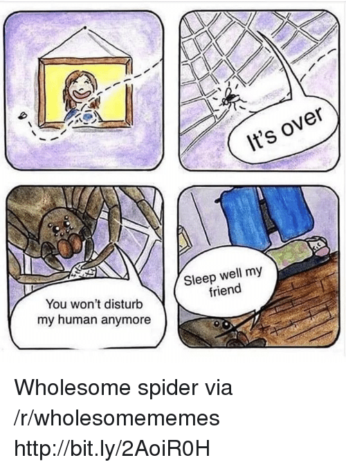 Spider, Http, and Wholesome: It's over  You won't disturb  my human anymore  Sleep well my  friend Wholesome spider via /r/wholesomememes http://bit.ly/2AoiR0H