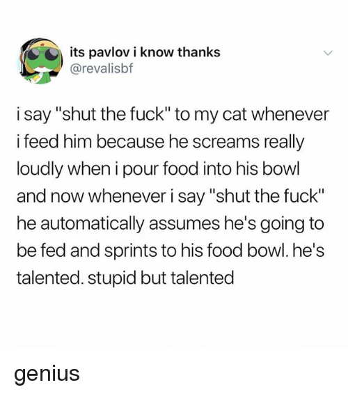 """Food, Tumblr, and Fuck: its pavlov i know thanks  @revalisbf  i say """"shut the fuck"""" to my cat whenever  i feed him because he screams really  loudly when i pour food into his bowl  and now whenever i say """"shut the fuck""""  he automatically assumes he's going to  be fed and sprints to his food bowl. he's  talented. stupid but talented genius"""