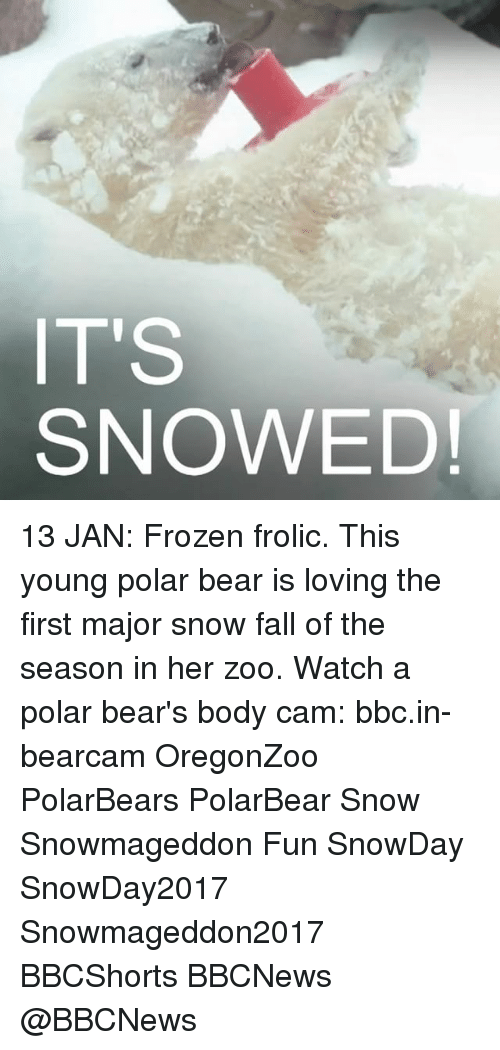 Frozen, Memes, and Bear: IT'S  SNOWED! 13 JAN: Frozen frolic. This young polar bear is loving the first major snow fall of the season in her zoo. Watch a polar bear's body cam: bbc.in-bearcam OregonZoo PolarBears PolarBear Snow Snowmageddon Fun SnowDay SnowDay2017 Snowmageddon2017 BBCShorts BBCNews @BBCNews