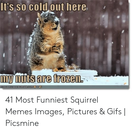 🔥 25+ Best Memes About Squirrel Nuts Meme | Squirrel Nuts Memes