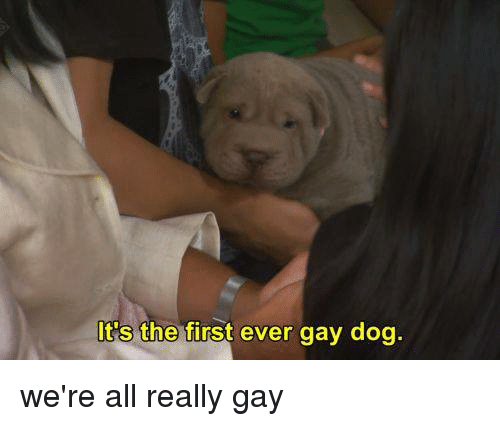 Dank, 🤖, and  Gay Dog: It's the first ever gay dog. we're all really gay