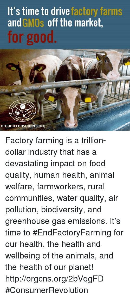 Animals, Community, and Driving: It's time to drive  factory farms  and  GMOs off the market,  for good  SSOCIATIO  organicconsumers.org Factory farming is a trillion-dollar industry that has a devastating impact on food quality, human health, animal welfare, farmworkers, rural communities, water quality, air pollution, biodiversity, and greenhouse gas emissions. It's time to #EndFactoryFarming for our health, the health and wellbeing of the animals, and the health of our planet! http://orgcns.org/2bVqgFD #ConsumerRevolution