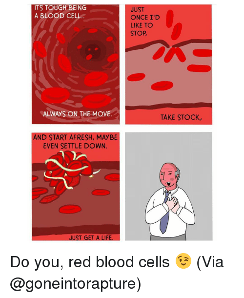 Memes, 🤖, and Blood: ITS TOUGH BEING  A BLOOD CELL  ALWAYS ON THE MOVE.  AND START AFRESH, MAYBE  EVEN SETTLE DOWN.  JUST GET A LIFE  JUST  ONCE I'D  LIKE TO  STOP  TAKE STOCK, Do you, red blood cells 😉 (Via @goneintorapture)