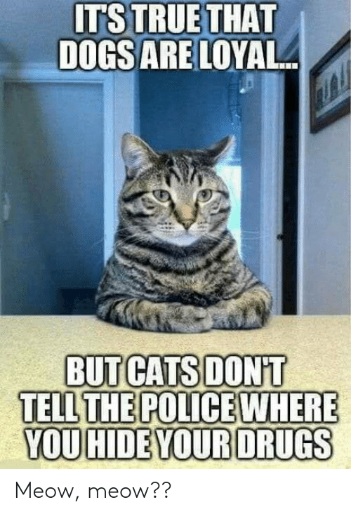Cats, Drugs, and Hide: ITS TRUETHAT  DOGSARE LOYAL  BUT CATS DONT  TELL  YOU HIDE YOUR DRUGS Meow, meow??