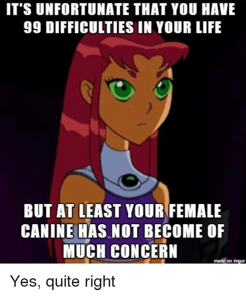 Funny, Life, and Imgur: IT'S UNFORTUNATE THAT YOU HAVE  99 DIFFICULTIES IN YOUR LIFE  BUT AT LEAST YOUR FEMALE  CANINE HAS NOT BECOME OF  MUCH CONCERN  made on imgur Yes, quite right