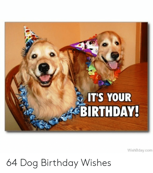 Birthday Dog And Com ITS YOUR BIRTHDAY WishBday 64 Wishes
