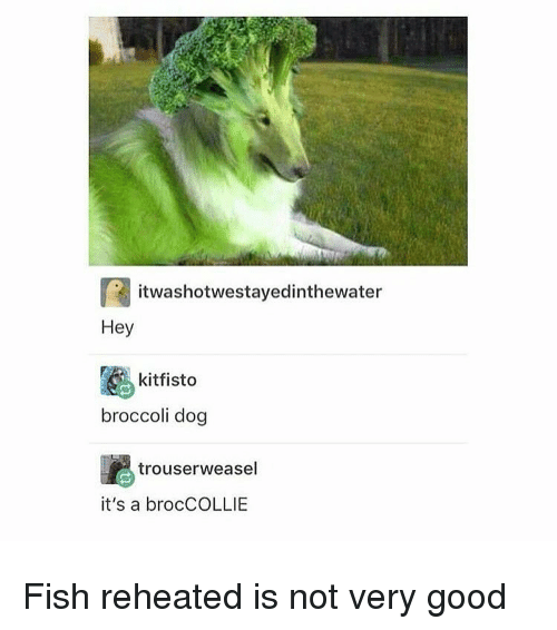 Trendy, Broccoli, and Weasel: itwashotwestayedin thewater  Hey  kitfisto  broccoli dog  trouser weasel  it's a brocCOLLIE Fish reheated is not very good