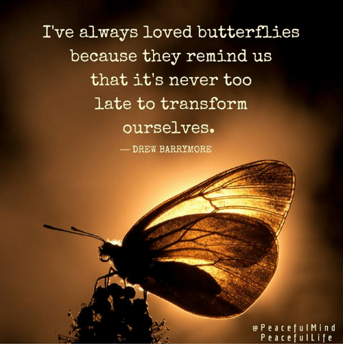 Memes, Transformers, and Butterfly: I've always loved butterflies  because they remind us  that it's never too  late to transform  ourse.Lves.  DREW BARRYMORE  P e a c e f u l M i n d  P e a c e f u l Life