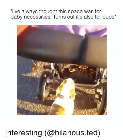 "Funny, Ted, and Space: ""I've always thought this space was for  baby necessities. Turns out it's also for pups"" Interesting (@hilarious.ted)"
