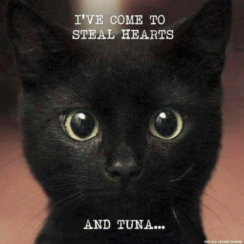 Memes, Hearts, and 🤖: I'VE COME TO  STEAL HEARTs  AND TUNA...