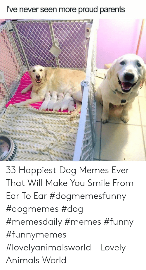Animals, Funny, and Memes: I've never seen more proud parents 33 Happiest Dog Memes Ever That Will Make You Smile From Ear To Ear #dogmemesfunny #dogmemes #dog #memesdaily #memes #funny #funnymemes #lovelyanimalsworld - Lovely Animals World