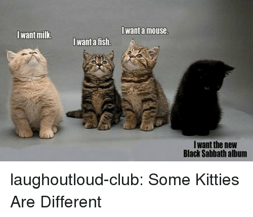 Club, Kitties, and Tumblr: Iwant a mouse  Iwant milk  want a fish.  Iwant the new  Black Sabbath album laughoutloud-club:  Some Kitties Are Different