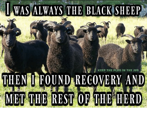 Iwas Always The Black Sheep Keep The Plug In The 1ug Then