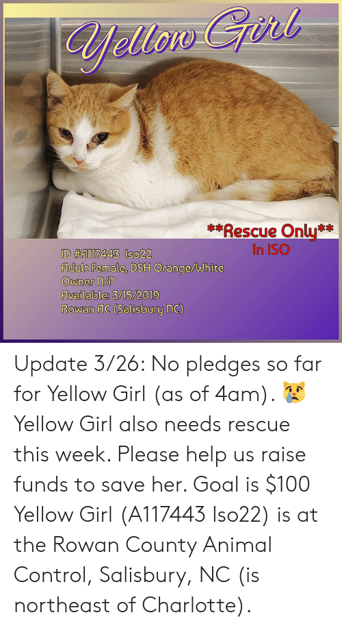 J*ii* Rescue Only in ISO Adult Female DSH OrangeWhite Owner MA
