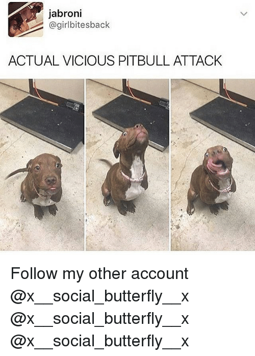 Jabroni, Memes, and Pitbull: jabroni  @girlbitesback  ACTUAL VICIOUS PITBULL ATTACK  r. Follow my other account @x__social_butterfly__x @x__social_butterfly__x @x__social_butterfly__x