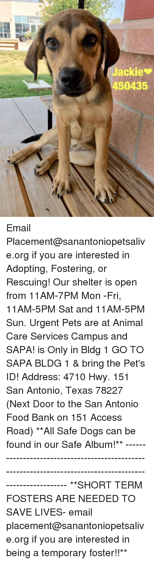 Dogs, Food, and Memes: Jackie  450435 Email Placement@sanantoniopetsalive.org if you are interested in Adopting, Fostering, or Rescuing!  Our shelter is open from 11AM-7PM Mon -Fri, 11AM-5PM Sat and 11AM-5PM Sun.  Urgent Pets are at Animal Care Services Campus and SAPA! is Only in Bldg 1 GO TO SAPA BLDG 1 & bring the Pet's ID! Address: 4710 Hwy. 151 San Antonio, Texas 78227 (Next Door to the San Antonio Food Bank on 151 Access Road)  **All Safe Dogs can be found in our Safe Album!** ---------------------------------------------------------------------------------------------------------- **SHORT TERM FOSTERS ARE NEEDED TO SAVE LIVES- email placement@sanantoniopetsalive.org if you are interested in being a temporary foster!!**