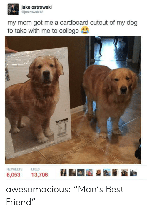 "Best Friend, College, and Tumblr: jake ostrowski  @jostrowski12  my mom got me a cardboard cutout of my dog  to take with me to college  RETWEETS  LIKES  6,053 13,706 awesomacious:  ""Man's Best Friend"""