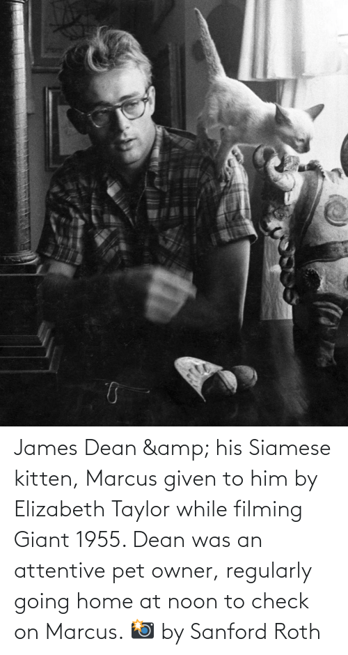 Giant, Home, and Siamese: James Dean & his Siamese kitten, Marcus given to him by Elizabeth Taylor while filming Giant 1955. Dean was an attentive pet owner, regularly going home at noon to check on Marcus. 📸 by Sanford Roth