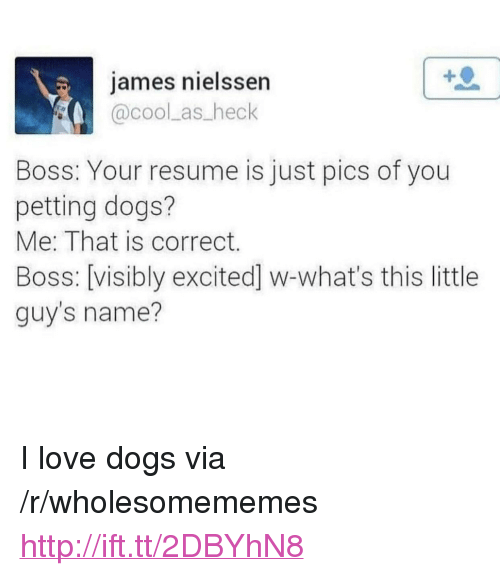 "Dogs, Love, and Cool: james nielssen  @cool as heck  Boss: Your resume is just pics of you  petting dogs?  Me: That is correct.  Boss: [visibly excited] w-what's this little  guy's name? <p>I love dogs via /r/wholesomememes <a href=""http://ift.tt/2DBYhN8"">http://ift.tt/2DBYhN8</a></p>"