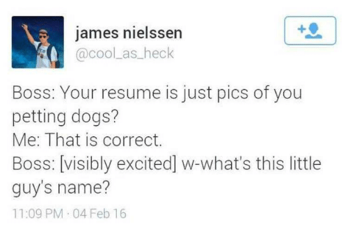 dogs resume and boss james nielssen coolas heck boss your resume