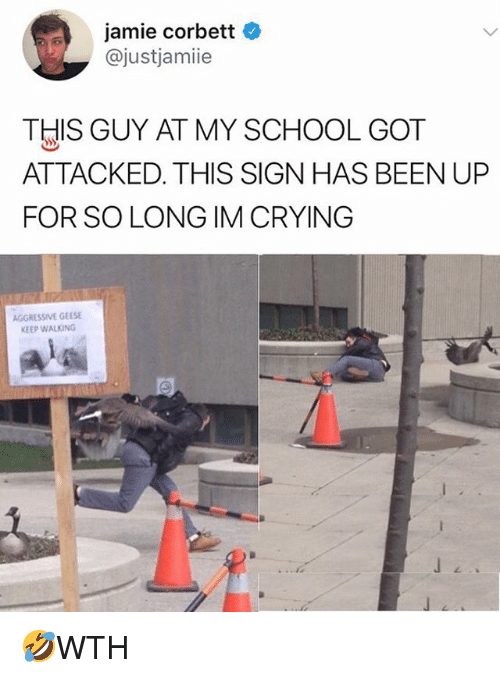 Crying, Memes, and School: jamie corbett  @justjamiie  THIS GUY AT MY SCHOOL GOT  ATTACKED. THIS SIGN HAS BEEN UP  FOR SO LONG IM CRYING  AGGRESSIVE GEESE  KEEP WALKING 🤣WTH