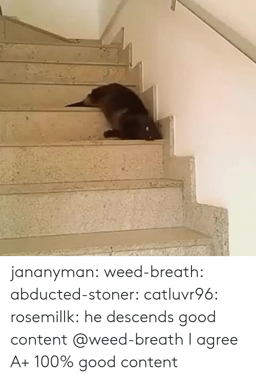 Tumblr, Weed, and Blog: jananyman:  weed-breath:  abducted-stoner:  catluvr96:  rosemillk:  he descends  good content  @weed-breath  I agree  A+ 100% good content