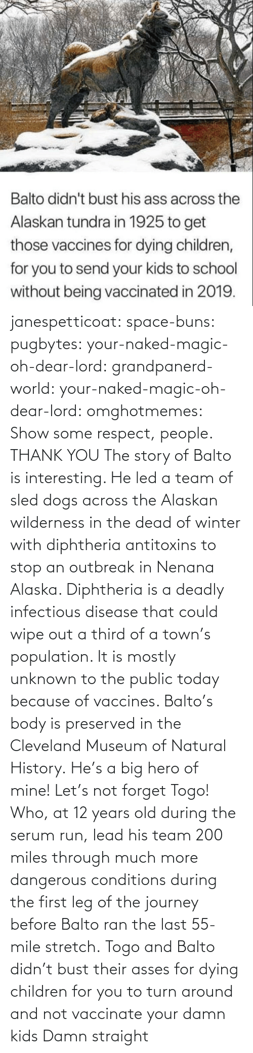 Children, Dogs, and Journey: janespetticoat: space-buns:  pugbytes:   your-naked-magic-oh-dear-lord:  grandpanerd-world:   your-naked-magic-oh-dear-lord:  omghotmemes: Show some respect, people.  THANK YOU   The story of Balto is interesting. He led a team of sled dogs across the Alaskan wilderness in the dead of winter with diphtheria antitoxins to stop an outbreak in Nenana Alaska. Diphtheria is a deadly infectious disease that could wipe out a third of a town's population. It is mostly unknown to the public today because of vaccines. Balto's body is preserved in the Cleveland Museum of Natural History.   He's a big hero of mine!   Let's not forget Togo! Who, at 12 years old during the serum run, lead his team 200 miles through much more dangerous conditions during the first leg of the journey before Balto ran the last 55-mile stretch.   Togo and Balto didn't bust their asses for dying children for you to turn around and not vaccinate your damn kids    Damn straight