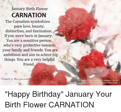 Memes Hy Birthday And Flower January Birth Carnation The Symbolizes Pure