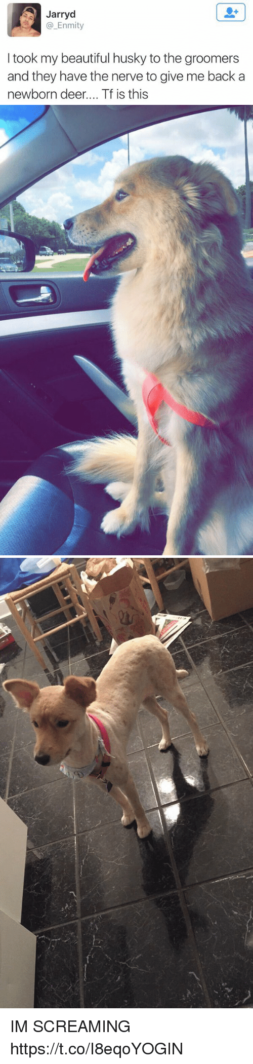 Beautiful, Deer, and Husky: Jarryd  @_Enmity  I took my beautiful husky to the groomers  and they have the nerve to give me back a  newborn deer.... Tf is this IM SCREAMING https://t.co/I8eqoYOGIN