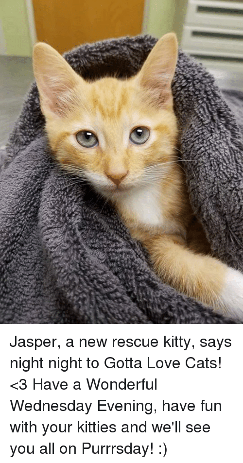 Cats, Kitties, and Love: Jasper, a new rescue kitty, says night night to Gotta Love Cats! <3 Have a Wonderful Wednesday Evening, have fun with your kitties and we'll see you all on Purrrsday! :)