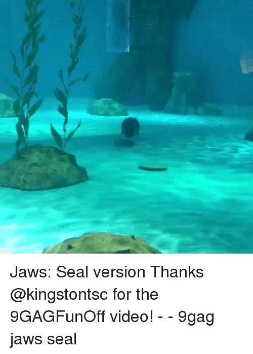 9gag, Memes, and Seal: Jaws: Seal version Thanks @kingstontsc for the 9GAGFunOff video! - - 9gag jaws seal