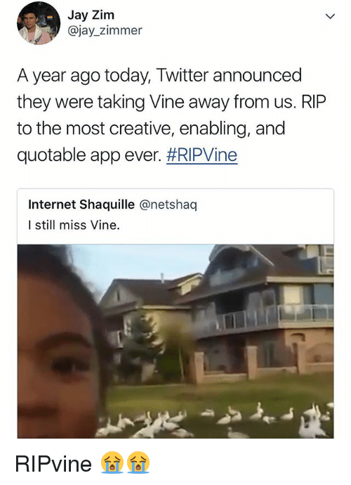 Internet, Jay, and Twitter: Jay Zim  @jay_zimmer  A year ago today, Twitter announced  they were taking Vine away from us. RIP  to the most creative, enabling, and  quotable appever. #RIPWne  Internet Shaquille @netshaq  I still miss Vine. RIPvine 😭😭